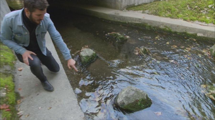 Un affluent du lac Léman a été gravement pollué