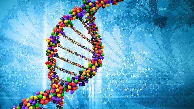 Le génome est l'ensemble du matériel génétique d'un individu. [adimas - Fotolia]