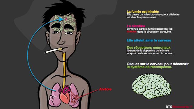 Le tabac et le système de récompense [Thierry Vilbert - RTS Découverte]
