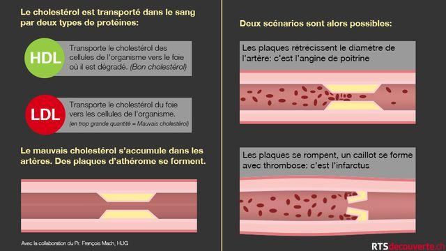 Le cholestérol [Agnès Rubin - RTS Découverte]