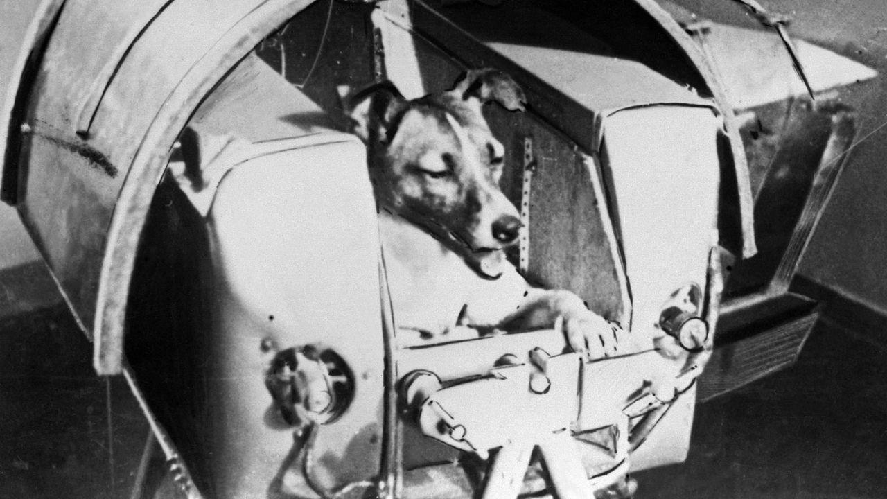 Laïka à bord de Spoutnik II, photographiée en novembre 1957. [Tass/AFP]