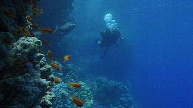 Menace sur le corail [RTS]