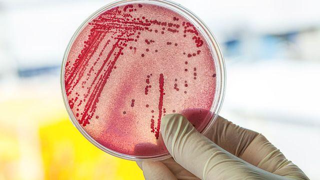 Les autorités sanitaires fédérales constatent l'augmentation des résistances pour certains agents pathogènes. [Photographee.eu - Fotolia]