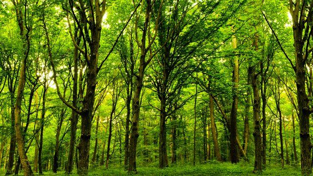 Développement durable [© vovan -  Fotolia]