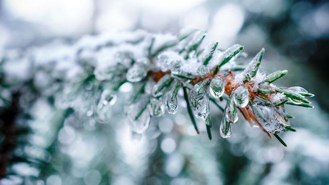La neige. [nordroden - Fotolia]