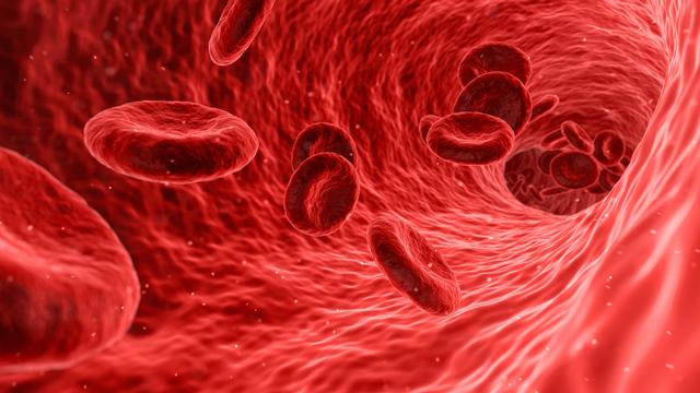 Le sang. [Francis Bonami. - Fotolia]