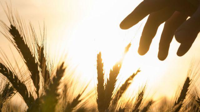 Le dossier sur les OGM de RTS Découverte [Gajus - Fotolia]