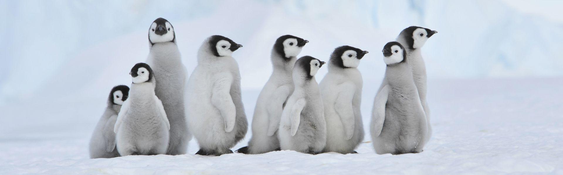 Le dossier sur l'Antarctique de RTS Découverte [Silver - Fotolia]