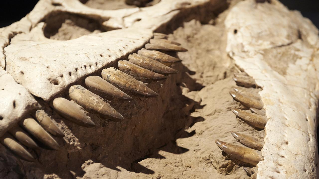 Dossier RTS Découverte sur les dinosaures [Petr Bonek - Fotolia]