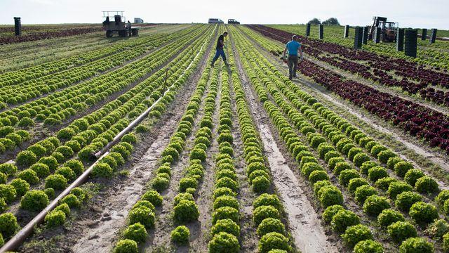 Une exploitation agricole biologique à Kerzers, dans le Seeland. [Gaëtan Bally - Keystone]