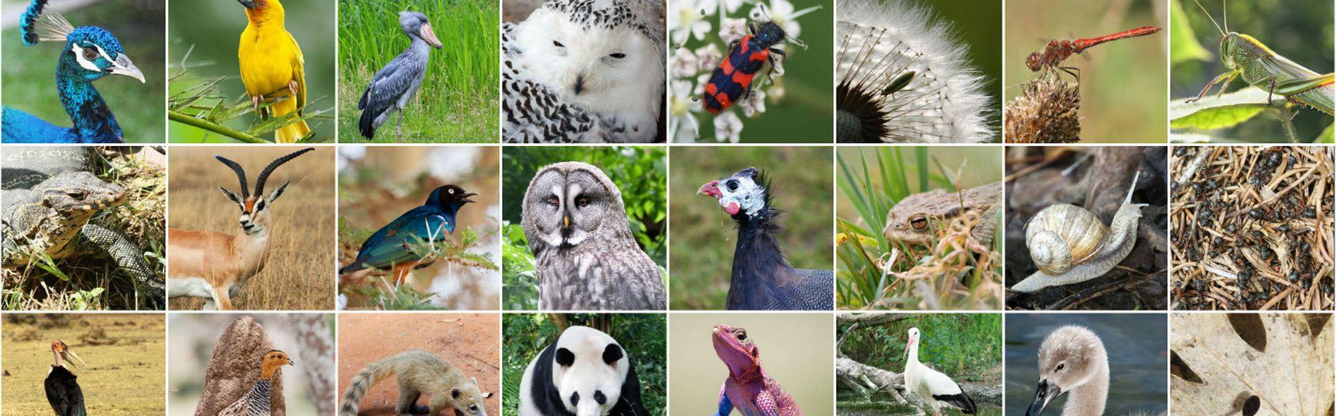 Le dossier sur la biodiversité de RTS Découverte [© Yü Lan  - Fotolia]