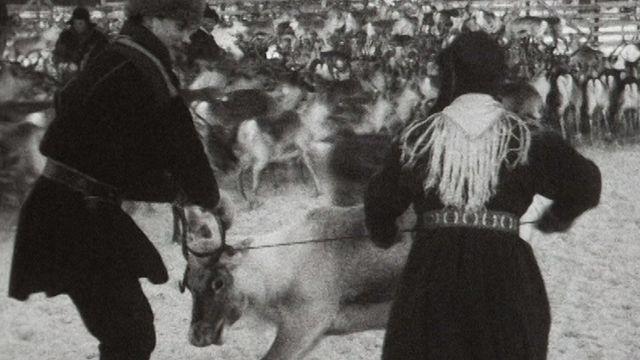 Triage des rennes en Laponie en 1959. [RTS]