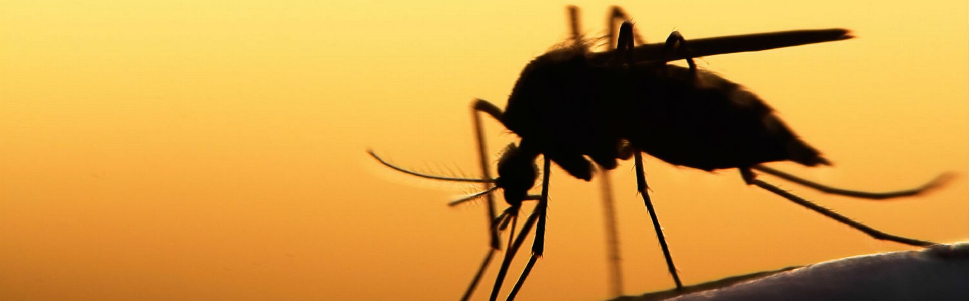 le dossier sur les maladies et insectes de RTS Découverte [© mycteria - Fotolia]