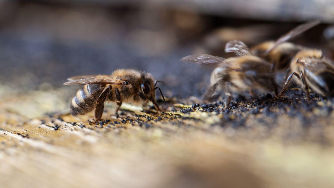 L'idée du projet est de resserrer les liens entre agriculteurs et apiculteurs. [Fondation rurale interjurassienne]