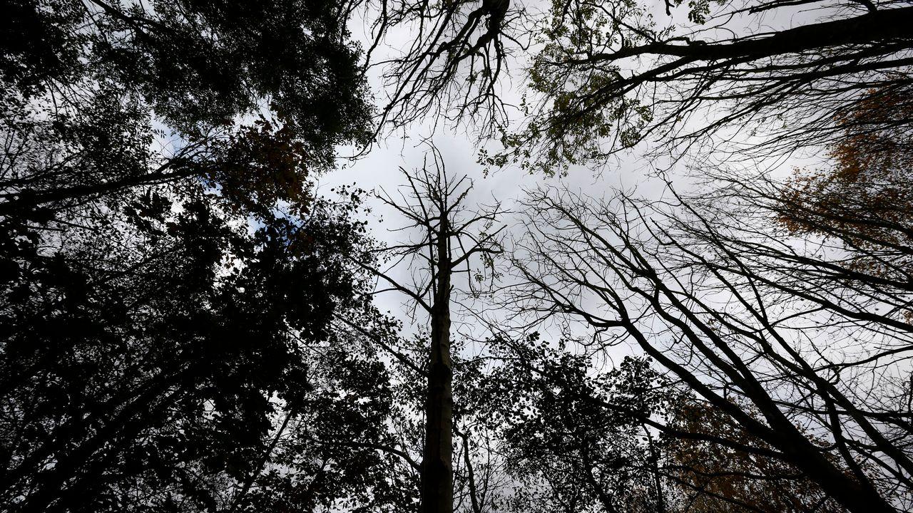 Le Royaume-Uni est l'un des pays avec le moins de forêts en Europe. [Darren Staples - Reuters]