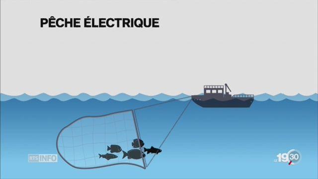 Filets électriques: pêche controversée [RTS]