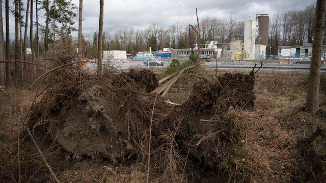 Des arbres arrachés par Burglind-Eleanor au bord de l'autoroute A6 entre Berne et Thoune, le 3 janvier 2018. [KEYSTONE - ANTHONY ANEX]