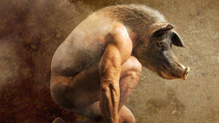 """Résultat de recherche d'images pour """"La ferme des animaux"""""""