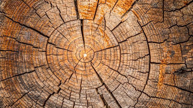 Cernes sur un tronc d'arbre. [tomeyk - Fotolia]