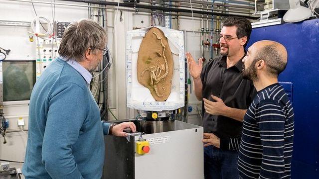 Des collaborateurs de l'European synchrotron Radiation Facility autour d'un fossile de dinosaure. ESRF [Pierre Jayet - ESRF]