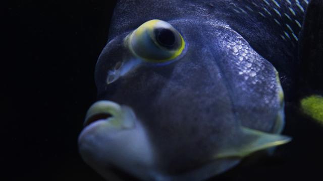 La vie marine connue s'enrichit de 20'000 espèces [Juliaokada - Fotolia]