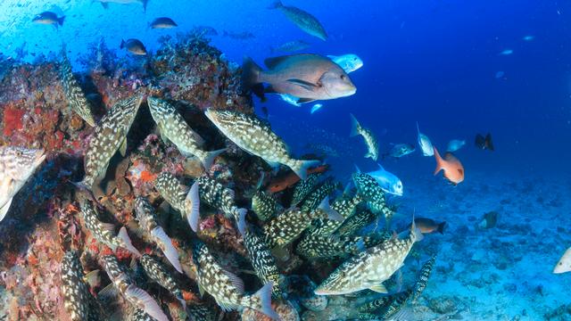 Nouvelles espèces dans les eaux australiennes [Whitcomberd - Fotolia]