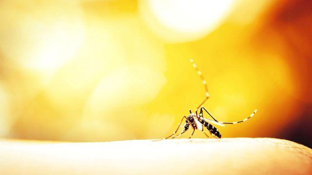 Les insectes vecteurs [© auimeesri - Fotolia]