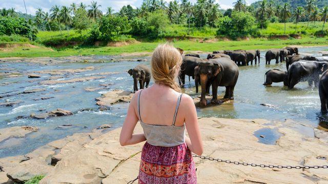 Une jeune femme faisant du volontariat dans un centre pour éléphants à Pinnawala au Sri Lanka. [dominikfrings - Fotolia]