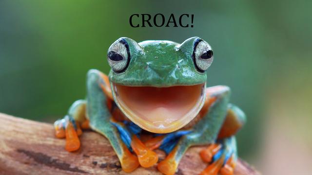 Le coassement de la grenouille en Espagne [Kuritafsheen - Fotolia]