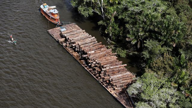 Des troncs d'arbres illégalement coupés dans la forêt amazonienne transportés par un bateau sur la rivière Tapajos, au Brésil. [Nacho Doce - Reuters]