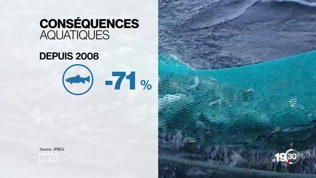 Biodiversité: 500 experts lancent un cri d'alarme mondial [RTS]