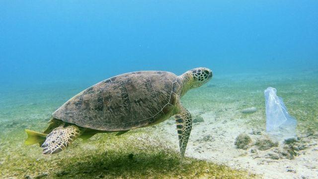 Une tortue verte face à un sac en plastique au large de l'île de Mayotte. [Biosphoto / Pierre Huguet - afp]