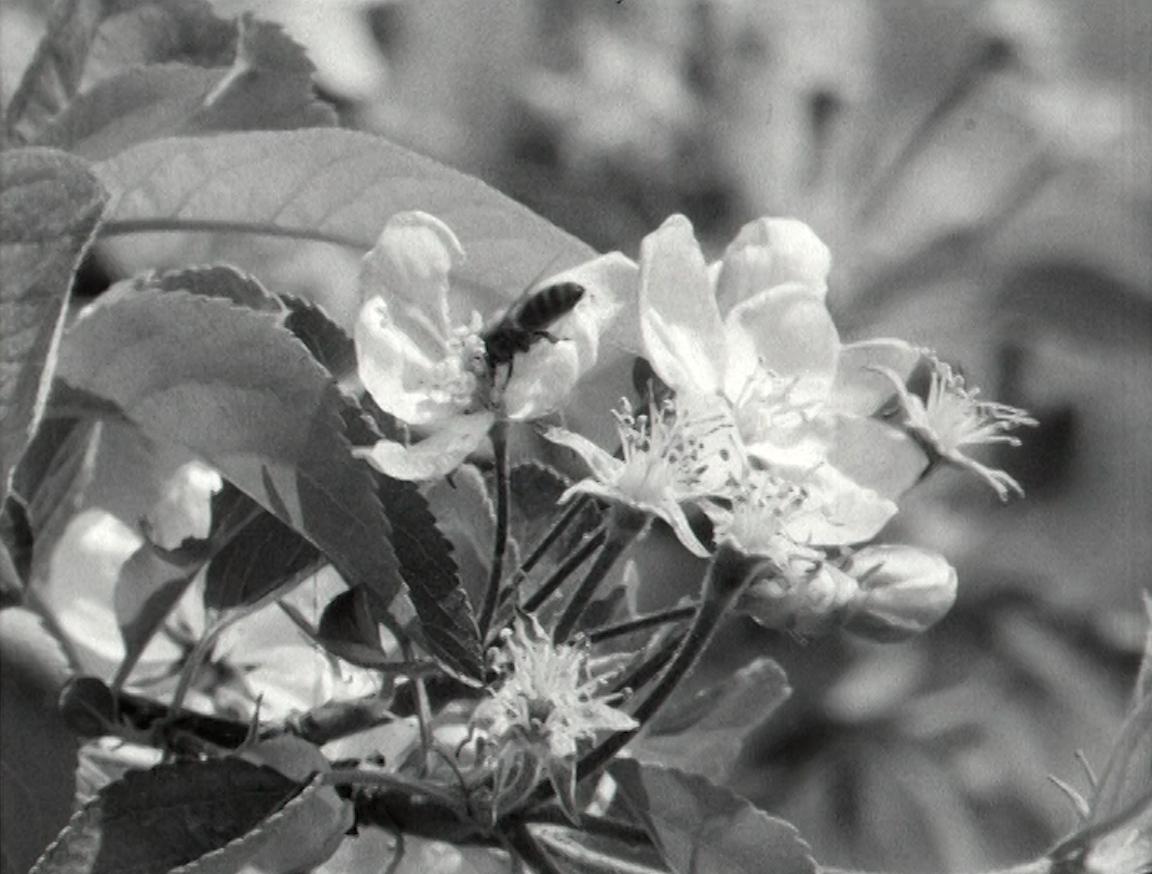 Les secrets du pollen