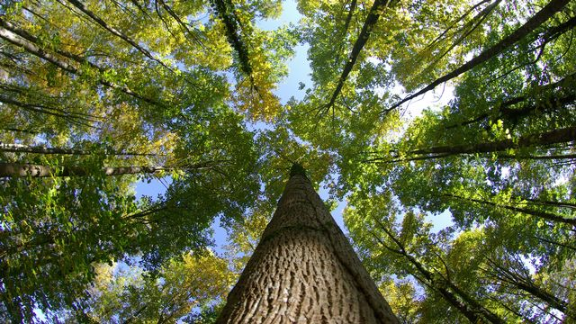 Découvrez les dessous des noms des arbres. Indigo Fotolia [Indigo - Fotolia]