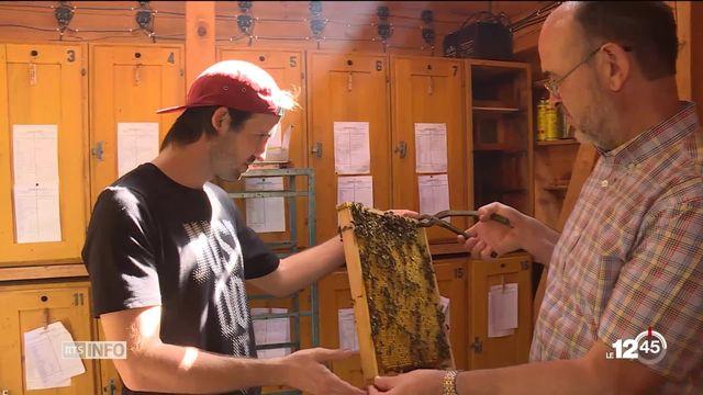 ZH: un apiculteur trouve le moyen de protéger ses ruches d'un parasite dévastateur [RTS]