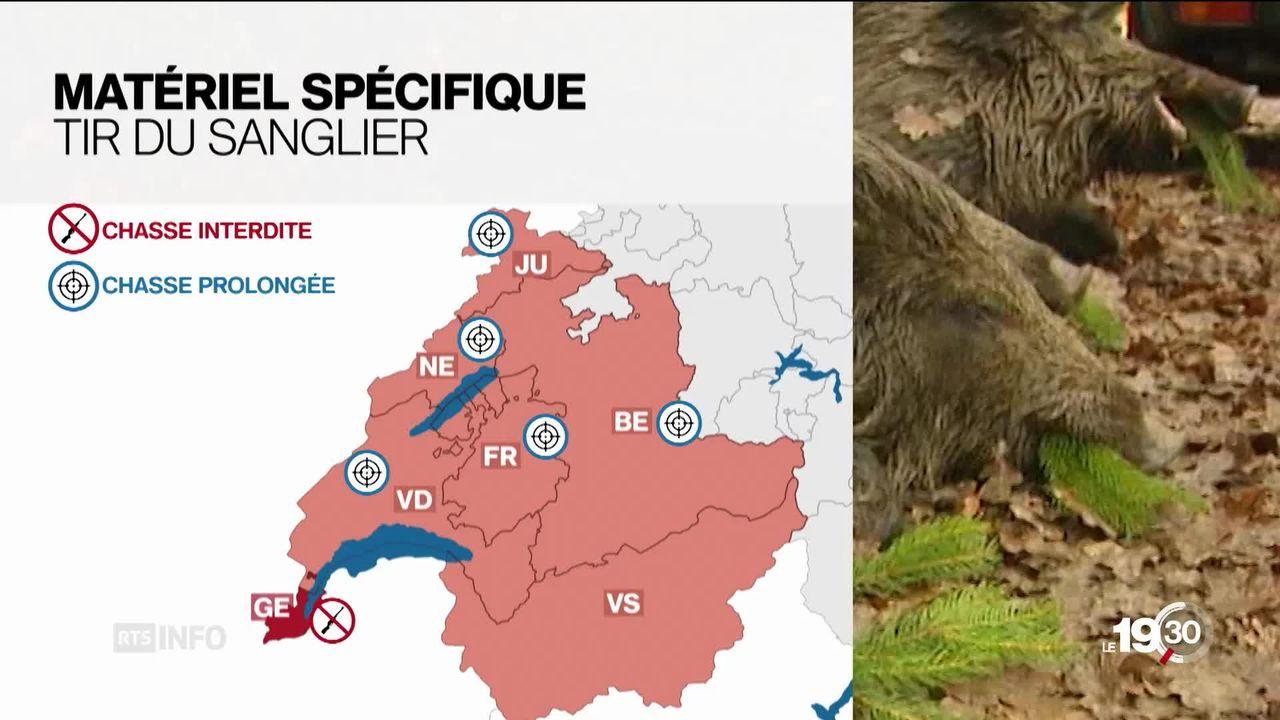 A Neuchâtel, le cheptel de sangliers explose et les coûts liés à leurs nuisances aussi [RTS]