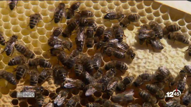 Journée des abeilles: un appel au secours pour un insecte menacé par les pesticides [RTS]
