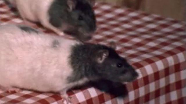 Rat [RTS]