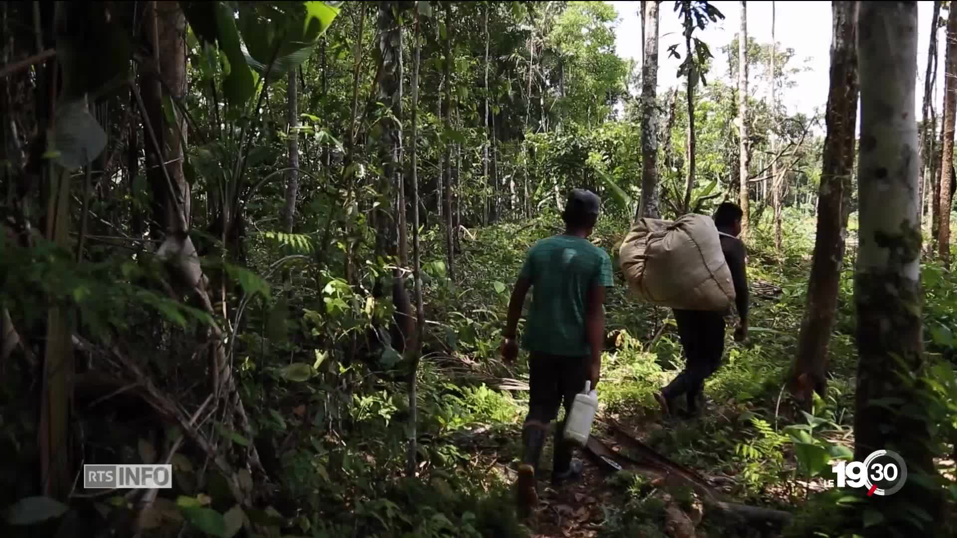 En Colombie, la coca résiste aux plans de reconversion agricole