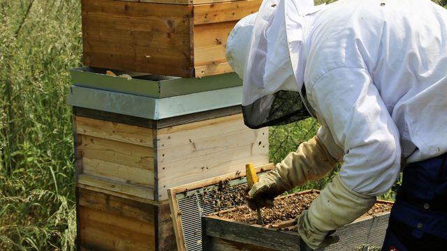 Passionnés, des amateurs d'apiculture s'occupent de ruches dans leur jardin. [Alex - Fotolia]