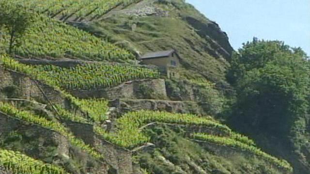 Murs de vigne en pierre sèche du Valais. [RTS]
