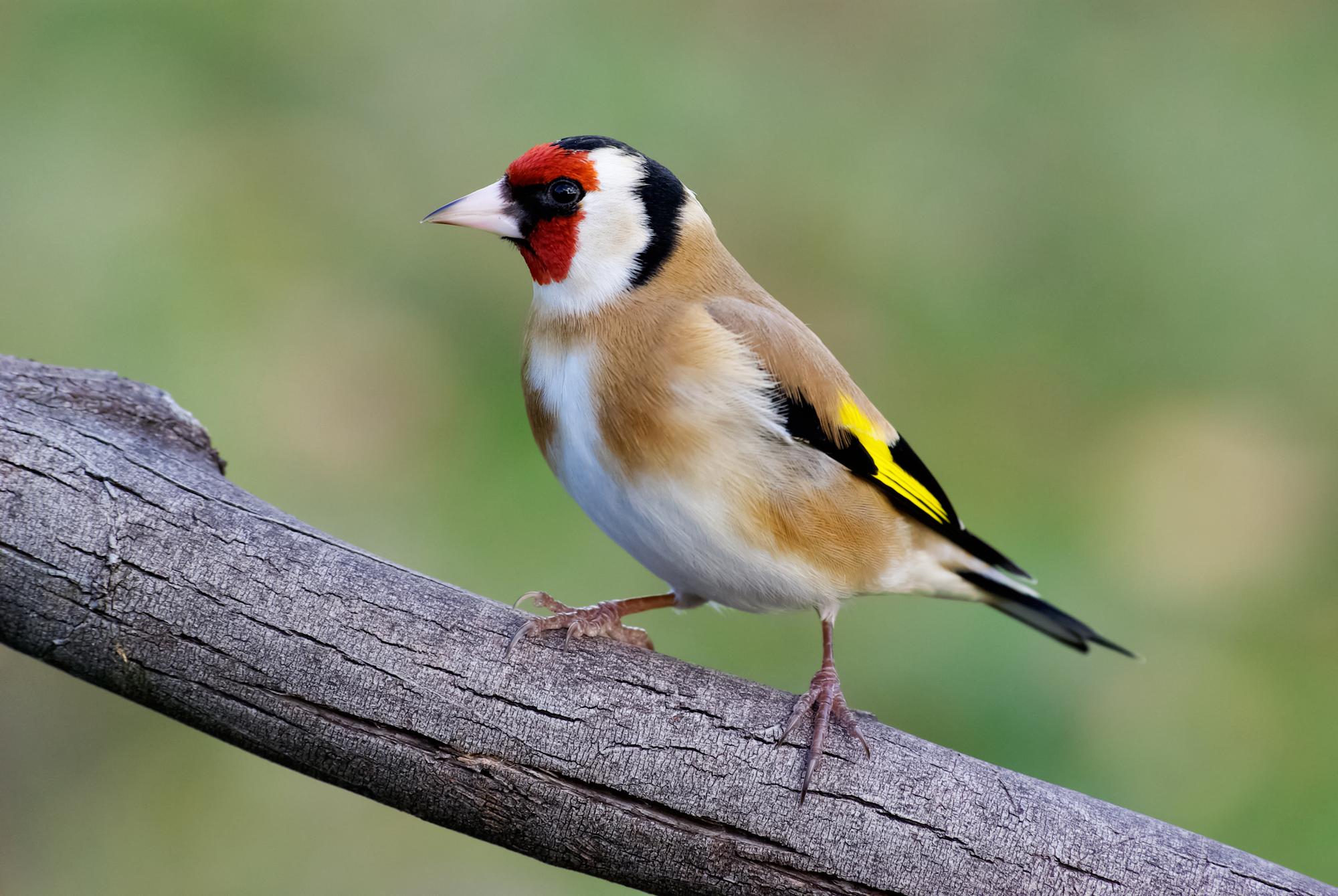 Les oiseaux de nos jardins monsieur jardinier - Jardin des oiseaux petit quevilly ...
