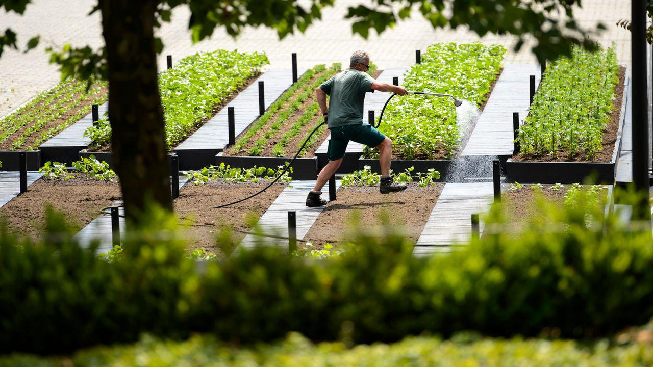 Vaud va interdire d'abord le glyphosate dans ses parcs et jardins (image d'illustration). [Laurent Gilliéron - Keystone]
