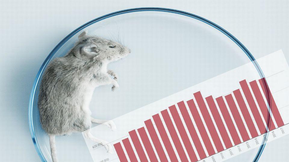 Une souris dans un laboratoire (image d'illustration). [Cristina Pedrazzini / CPD - AFP]