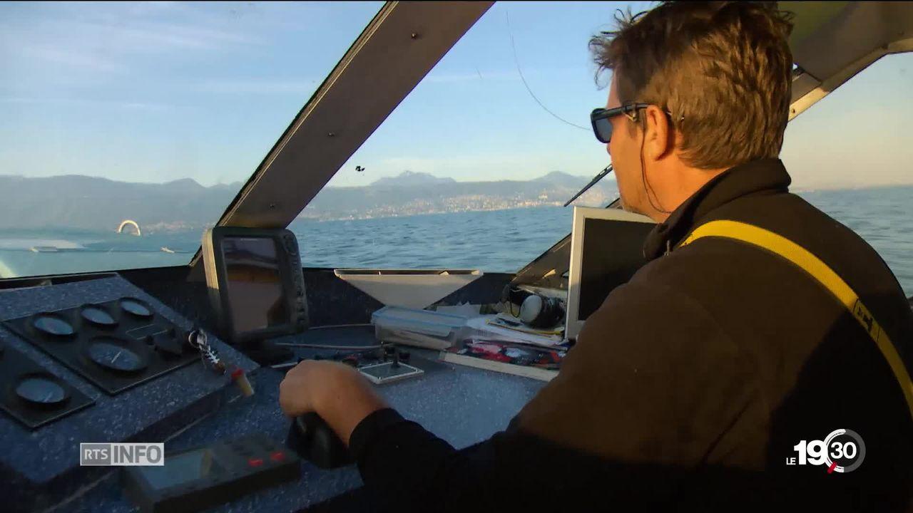 Lac Léman: la féra se fait de plus en plus rare. La chute de cette espèce inquiète après la raréfaction de la perche. [RTS]