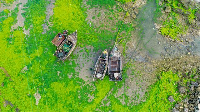 Des algues vertes sur la côte en Chine. [Han Jiajun - Imagechina/AFP]