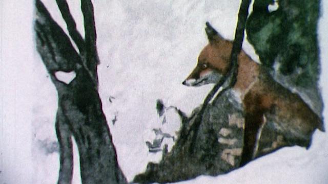 Le renard [RTS]