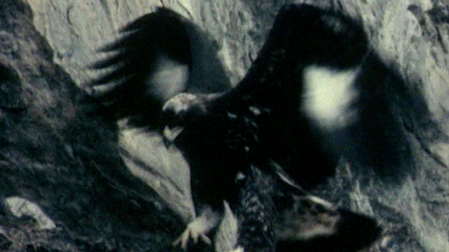 L'aigle [RTS]