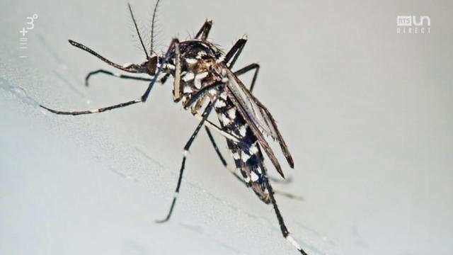 Les ravages du moustique tigre en Suisse. [RTS]