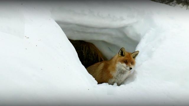 Et en hiver [RTS]